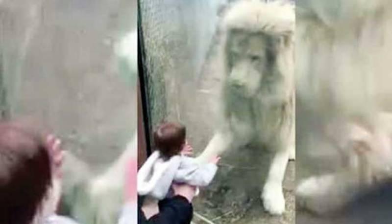 امریکی چڑیا گھر کے ببر شیر کو نئی دوست مل گئی