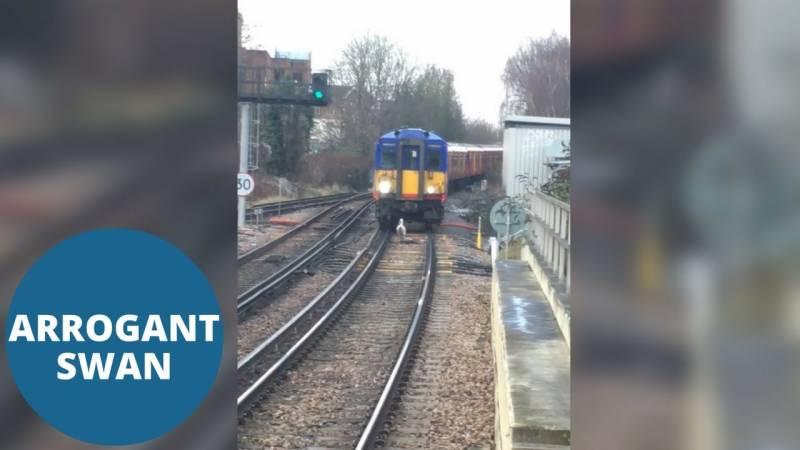 ضدی ہنس نے ٹرین کی رفتار سست کر دی