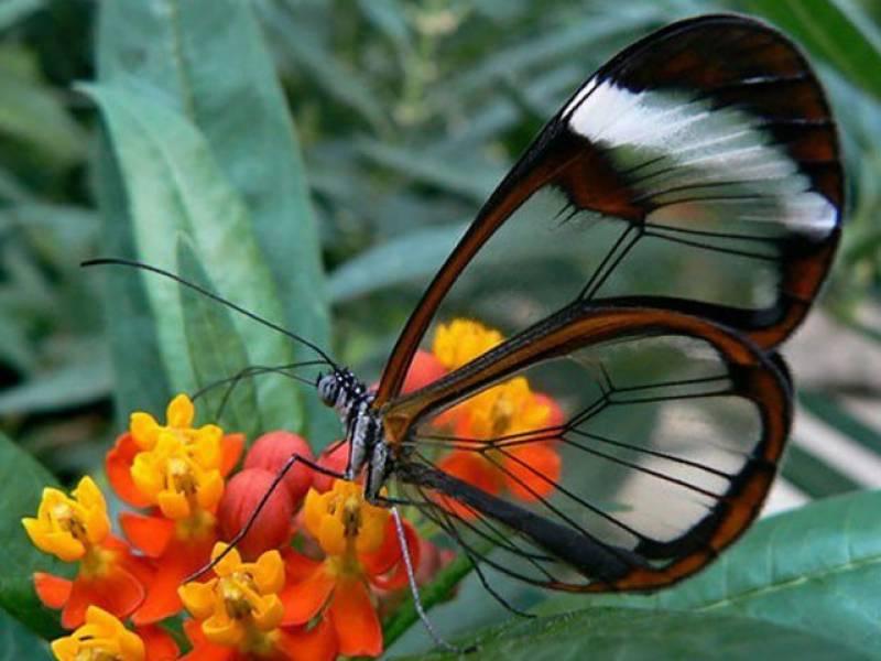 قدرت کے ایسے حسین نظارے کہ آپ بھی دیکھتے رہ جائیں گے!
