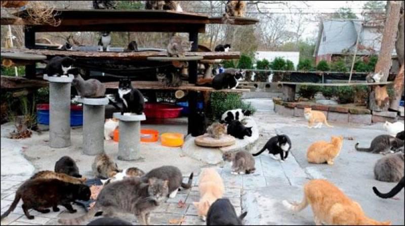 بلیوں سے محبت کی اعلیٰ مثال