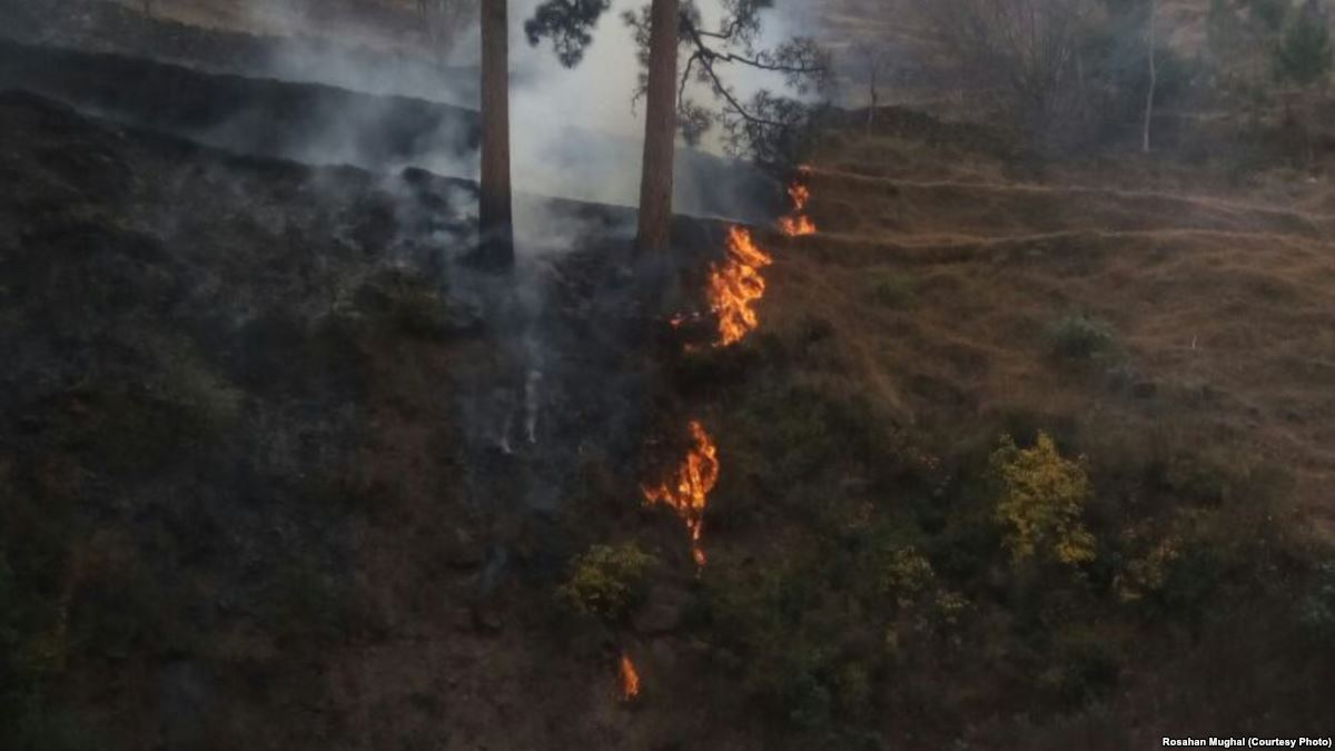 پاکستانی کشمیر میں جنگلوں کو آگ لگانے کے واقعات میں اضافہ