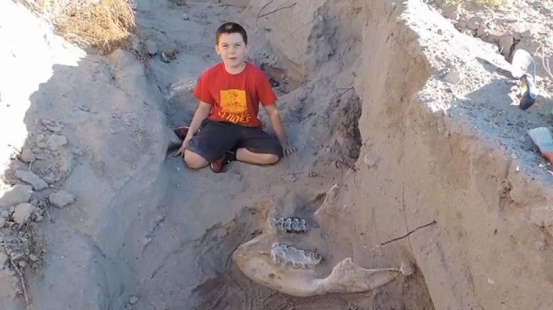 دس سالہ بچے نے 12 لاکھ سال پرانی باقیات دریافت کرلیں