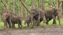 انڈیا میں ہاتھیوں کی گنتی جاری