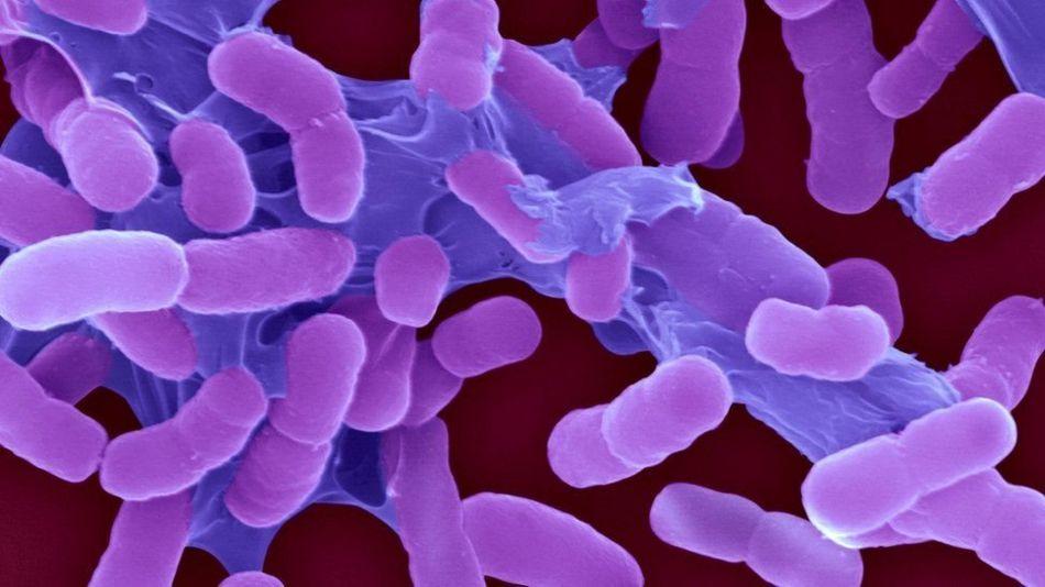 خطرناک ترین بیکٹریا کی نئی فہرست تیار